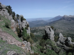"The forest of ""Montes"" (Orgosolo)"